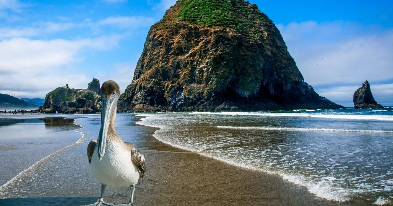 This Is Everything You Can Do At Cannon Beach, Oregon   TheTravel