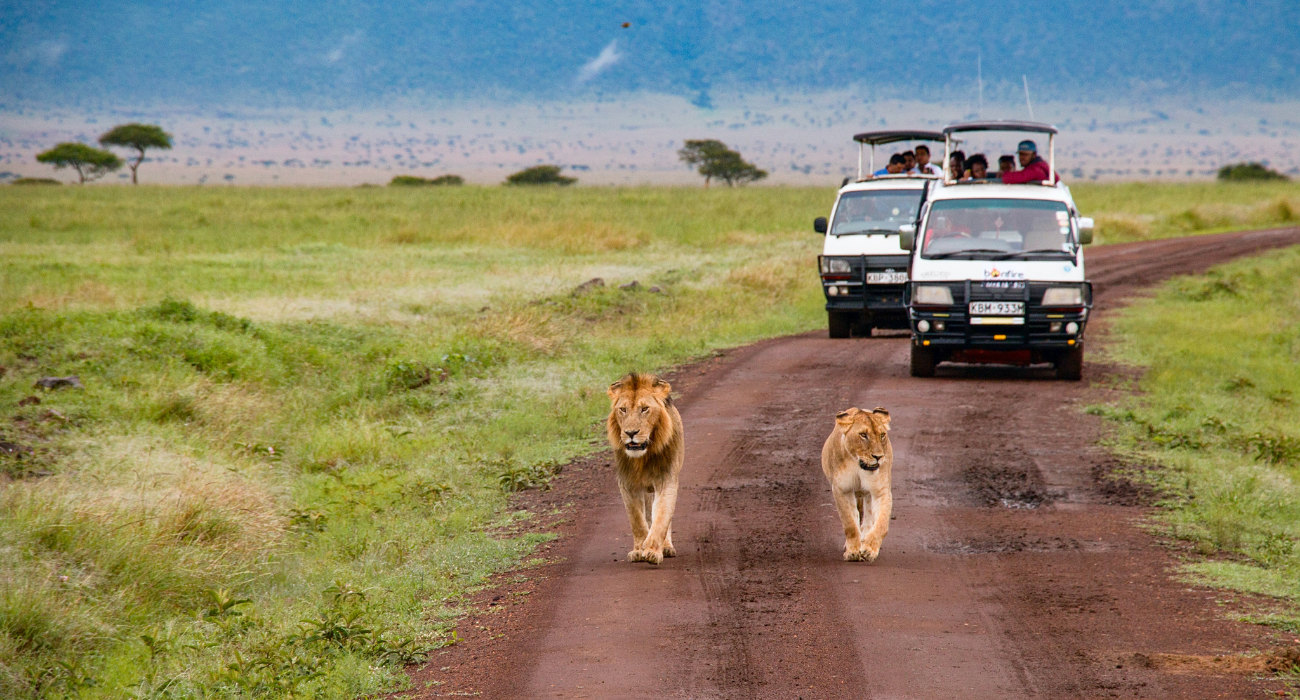 The Best Time To Visit South Africa's Largest Game Park, And What To Expect