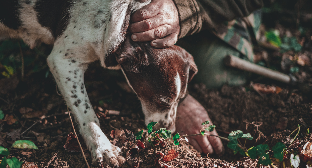 A Truffle-Hunting Tour Might Just Be Your New Favorite Pastime In Florence, Italy